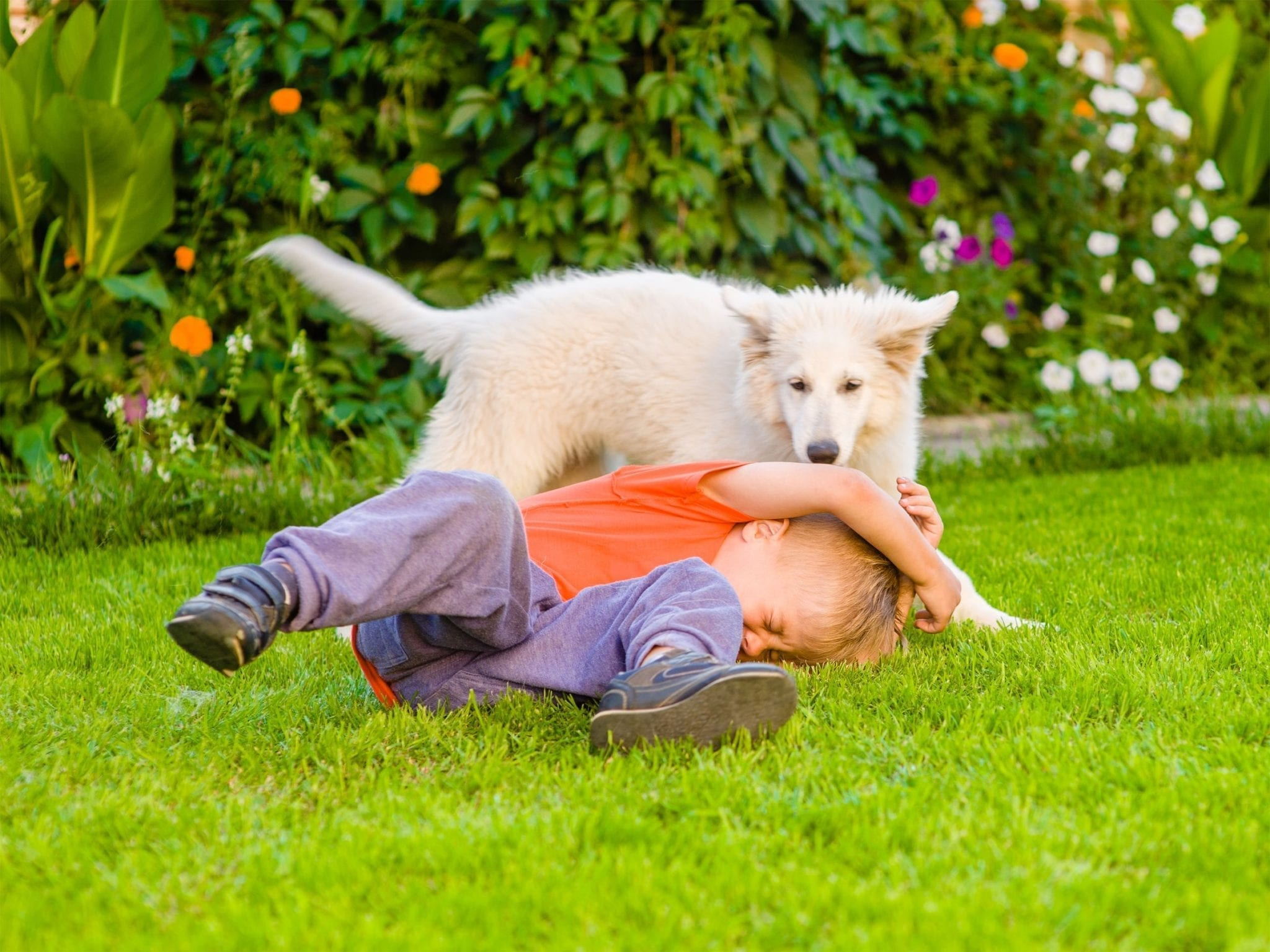 If Your Child Is Attacked By a Dog or Wild Animal